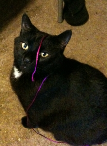 Black cat looking up at the camera, an ombre purple silk string draped over his face and back