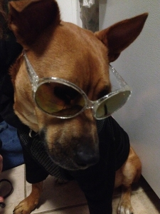 Fawn-colored dog in sparkly silver sunglasses and a black hoodie