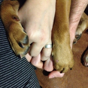closeup photo of clasped hands with dog paws clinging to either side