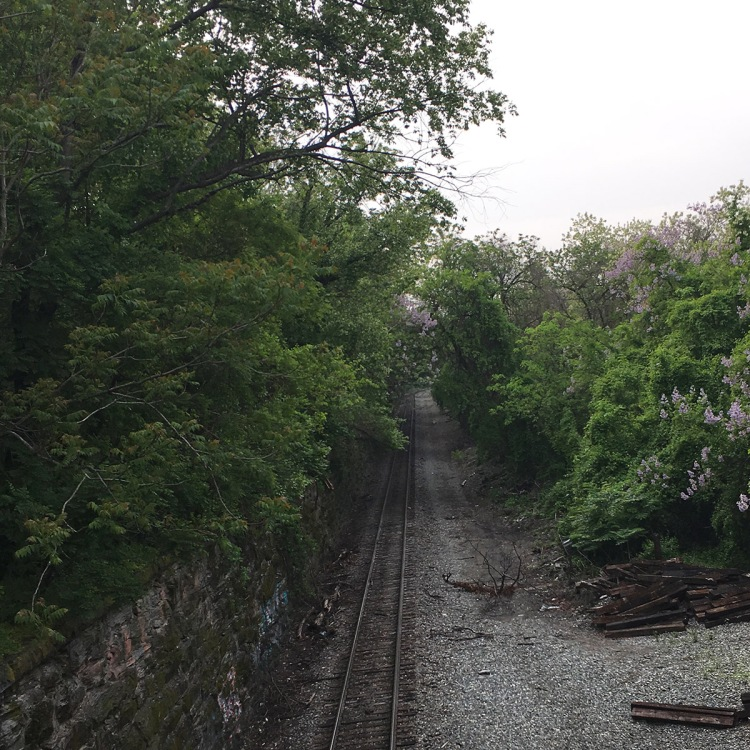 Abandoned train tracks with crumbling train ties on the lower right hand side, underneath blooming buckeye and crepe myrtle trees, and a lightly-graffiti'd stone wall on the left hand side, with sumac and oak trees flourishing above it.